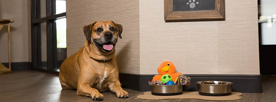 Pet Friendly Hotel in Marshfield, WI