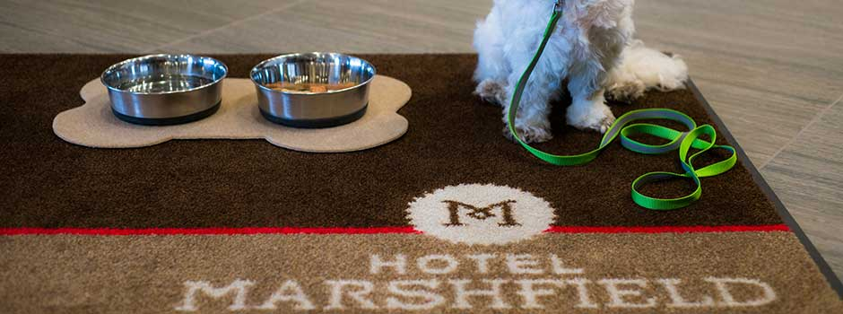 Pet-friendly Accommodations at Hotel Marshfield
